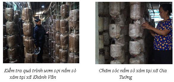 Ninh Bình: Hiệu quả mô hình nuôi trồng nấm sò xám