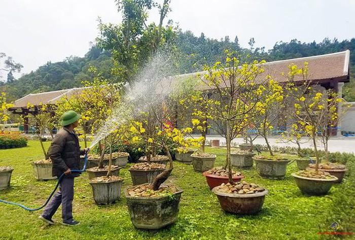 Quảng Ninh: Triển khai đồng bộ các dự án xây dựng thương hiệu và phát triển thị trường